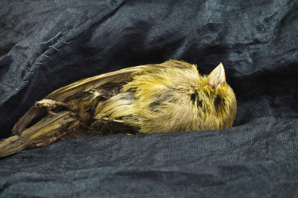 Image result for dead canary""