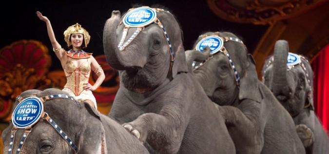 circus-elephants-