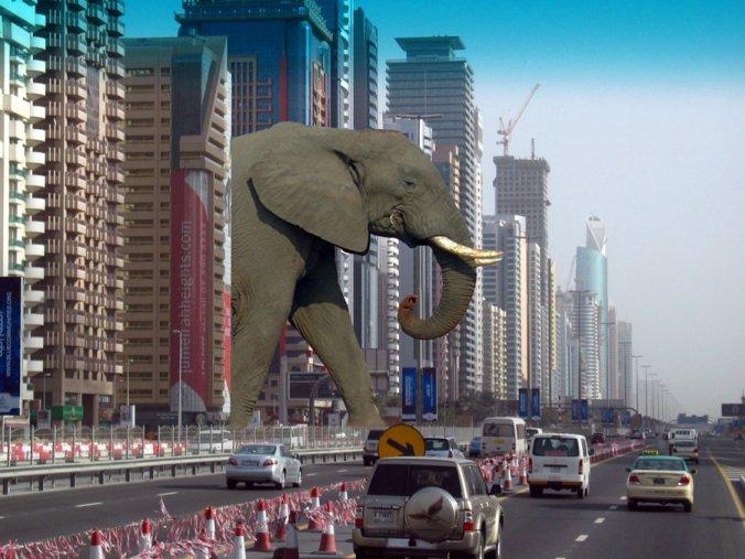 There's no elephant. Do you see an elephant?