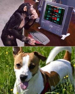 chimp-jack