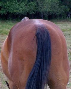horses-ass