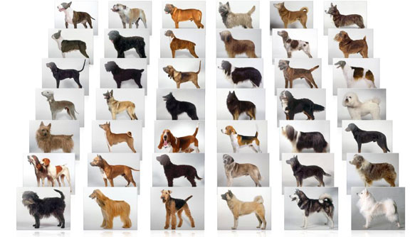 Dog-Breeds-MAIN