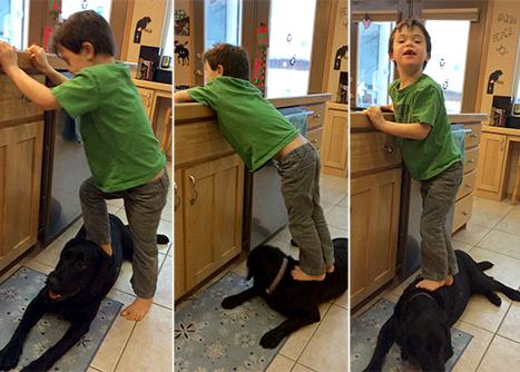 Trig on dog