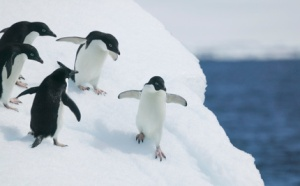 The minds of your children aren't safe at CUNY, but your penguins might enjoy it there...