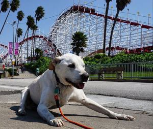 Like all dogs, Poh has several amusement parks on his bucket list...
