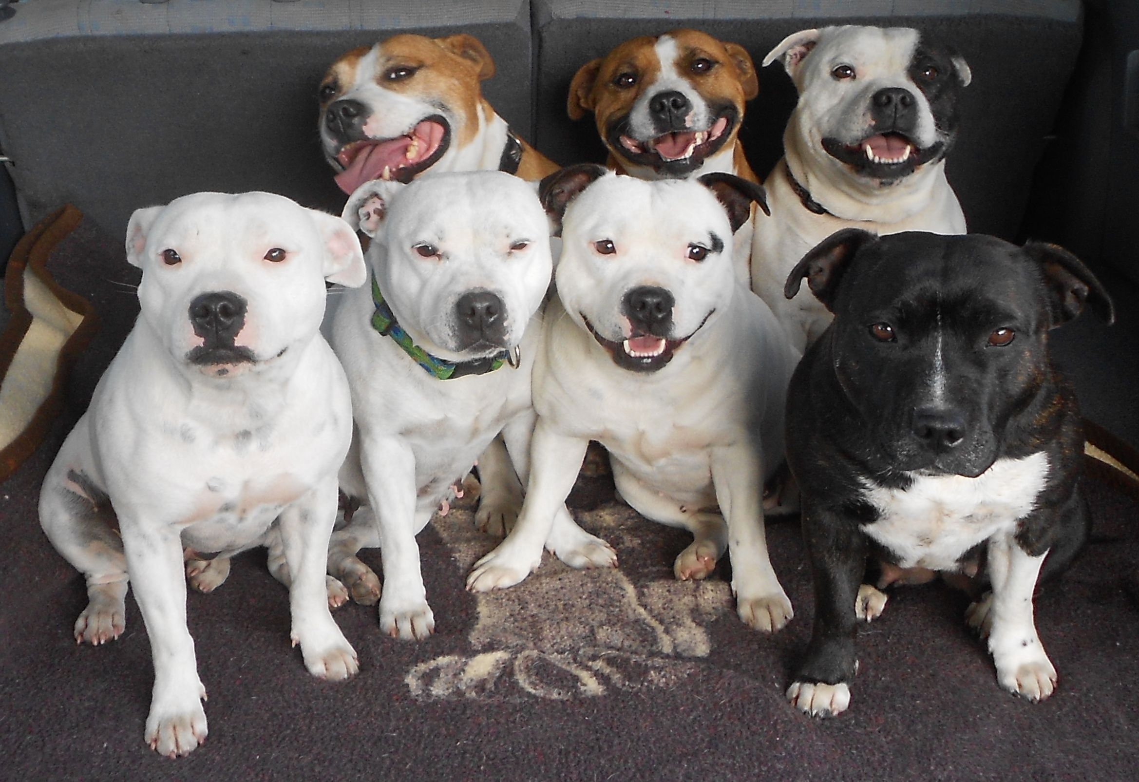 dog fighting ethics alarms group shot