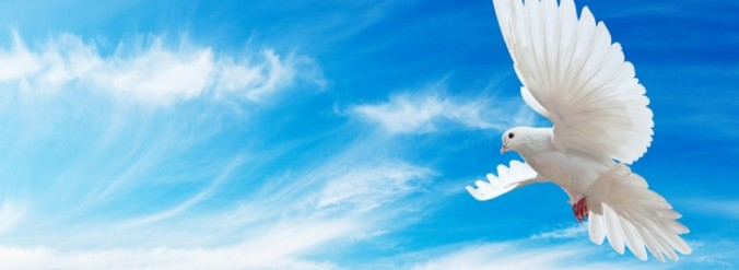 Hope-Dove-Flying