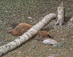 beaver-crushed-by-his-own-tree