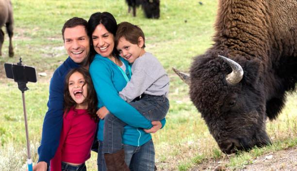 bison-selfie