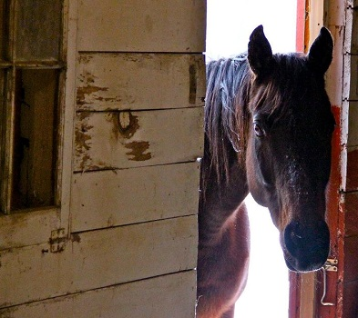 horse-in-barn-door