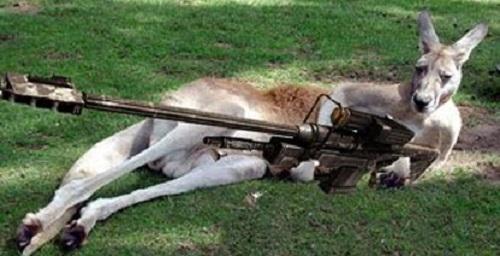 how to get a gun in australia