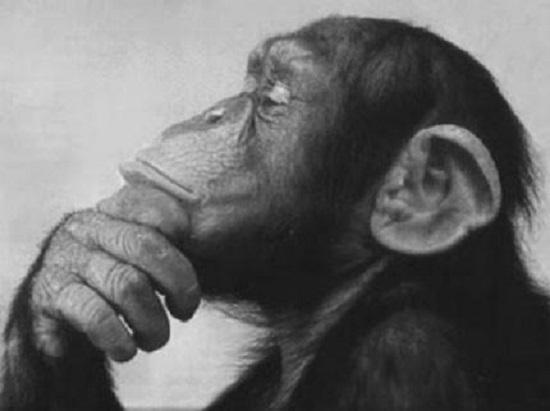 monkey-thinker