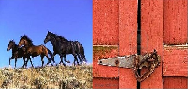 lock-the-barn-door-after-the-horse-has-bolted-2